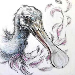 """""""Imperiled: Roseate Spoonbill"""", graphite and powder pastel on panel, 8x8x1½ """", 2017"""