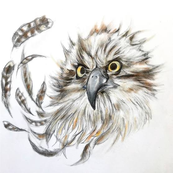 """Imperiled: Osprey"", graphite and powder pastel on panel, 8x8x1½ "", 2017"