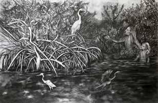 """Vision in a Mangrove Estuary"", graphite on bristol board, 11x17"", 2017"
