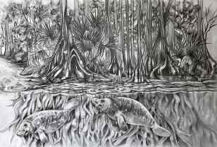 """Vision in a Cypress Springs Estuary"", graphite on bristol board, 11x17"", 2017"