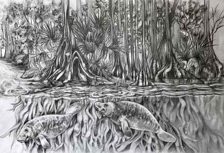 """Vision in a Cypress Springs Estuary"", graphite on bristol board, 11x17"", 2017"