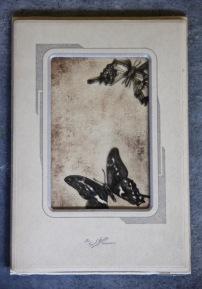 Schaus' Swallowtail